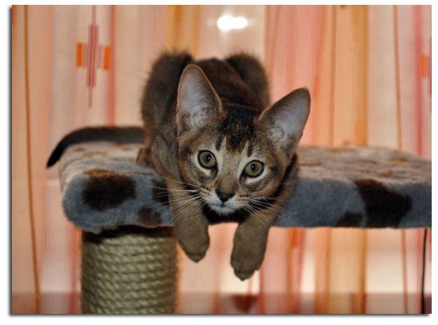 Вакцинация кошки на дому