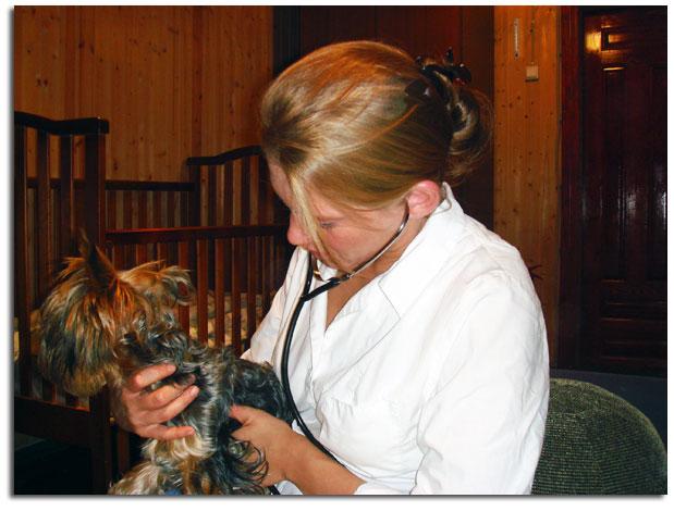 Вызов ветеринара и консультация на дому 24 - Санкт